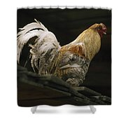 A Rooster Struts On A Wood Roof Shower Curtain