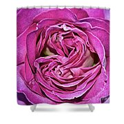 A Rose Is A Rose ... Shower Curtain