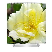 A Rose Is A Rose Rrp Shower Curtain