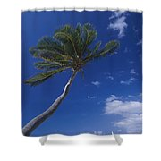 A Scenic View Of A Palm Tree Shower Curtain