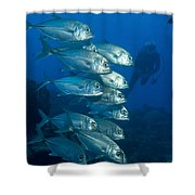 A School Of Bigeye Trevally, Papua New Shower Curtain