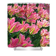 A Sea Of Pink Tulips. Square Format Shower Curtain