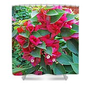 A Section Of Pink Bougainvillea Flowers Shower Curtain