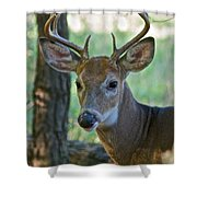 A Seven Point Profile 9752 Shower Curtain