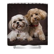 A Shihtzu And A Poodle On A Brown Shower Curtain
