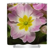 A Shy Flower  Shower Curtain