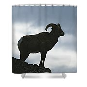 A Silhouetted Bighorn Sheep Standing Shower Curtain