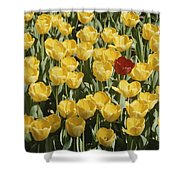 A Single Red Tulip Among Yellow Tulips Shower Curtain