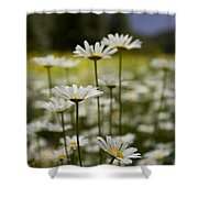 A Small Group Of Daisies Stands Shower Curtain