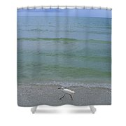 A Snowy Egret Walks Along The Beach Shower Curtain