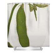 A Soybean Plant Shower Curtain