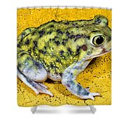 A Spadefoot Toad Shower Curtain