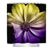 A Special Daisy II Shower Curtain