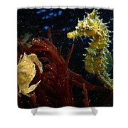 A Spotted Young Blue Crab, Callinectes Shower Curtain