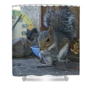 A Squirrel In 55 Degree Weather Shower Curtain
