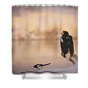 A Stellers Sea Eagle Perched On A Log Shower Curtain