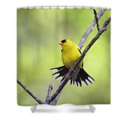 A Stretch Showing Beauty Shower Curtain