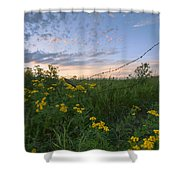 A Summer Evening Sky With Yellow Tansy Shower Curtain