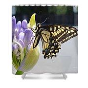 A Swallowtail Butterfly Shower Curtain