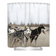 A Team Of Dogs Pull A Cart Shower Curtain