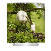A Tender Moment - Great Egret And Chick Shower Curtain