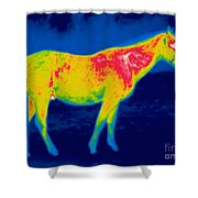 A Thermogram Of A Horse Shower Curtain