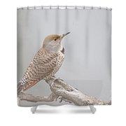 A Thrush Posing  Shower Curtain