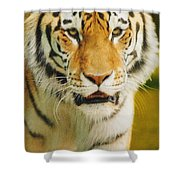 A Tiger Shower Curtain