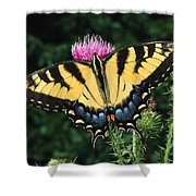 A Tiger Swallowtail Butterfly Feeds Shower Curtain