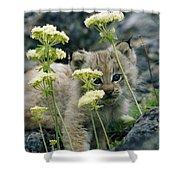 A Tiny Lynx Cub Felis Lynx Peeks Shower Curtain