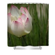A Touch Of Blush Shower Curtain
