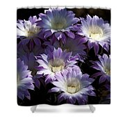 A Touch Of Lavender  Shower Curtain