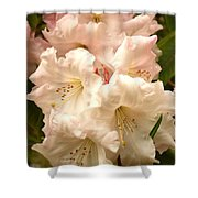 A Touch Of Pink Shower Curtain by Carol Groenen