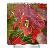 A Touch Of Yellow In Fall Shower Curtain