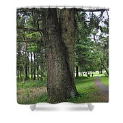 A Tree Divided Shower Curtain