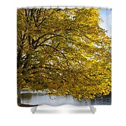 A Tree With Golden Leaves And A Park Shower Curtain by John Short