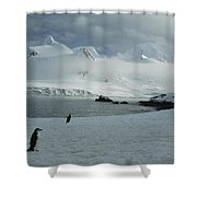 A Trio Of Chin Strap Penguins Amble Shower Curtain