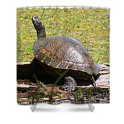A Turtle Sunning Shower Curtain
