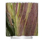 A Varigated Leaf Cast-iron Plant Shower Curtain
