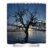 A View At Dawn Of A Silhouetted Tree Shower Curtain