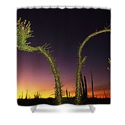 A View At Twilight Of A Boojum Tree Shower Curtain