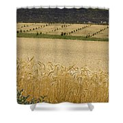A View Of A Summer Field Of Wheat Shower Curtain