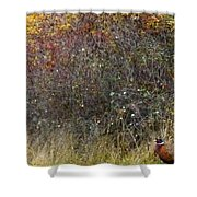 A Watchful Pheasant Shower Curtain
