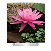 A Waterlily's Grace Shower Curtain