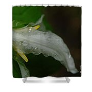 A Wet Trillium Shower Curtain
