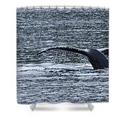 A Whale's Tale Shower Curtain