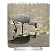 A White Ibis Probes The Mud Shower Curtain