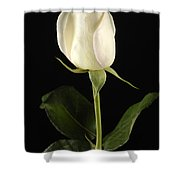 A White Rose Rosaceae Shower Curtain
