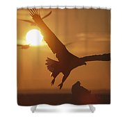 A White-tailed Eagle In Flight Shower Curtain