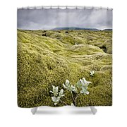A White Wildflower Growing On A Rugged Shower Curtain